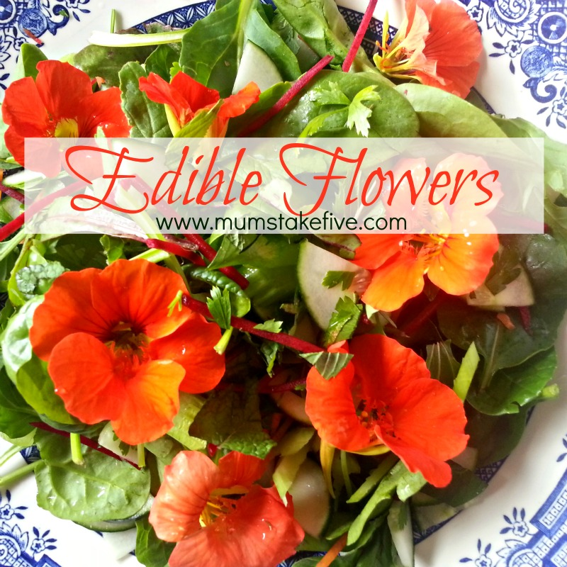 edible flowers  what to grow