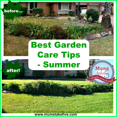 Caring for your Summer Lawn