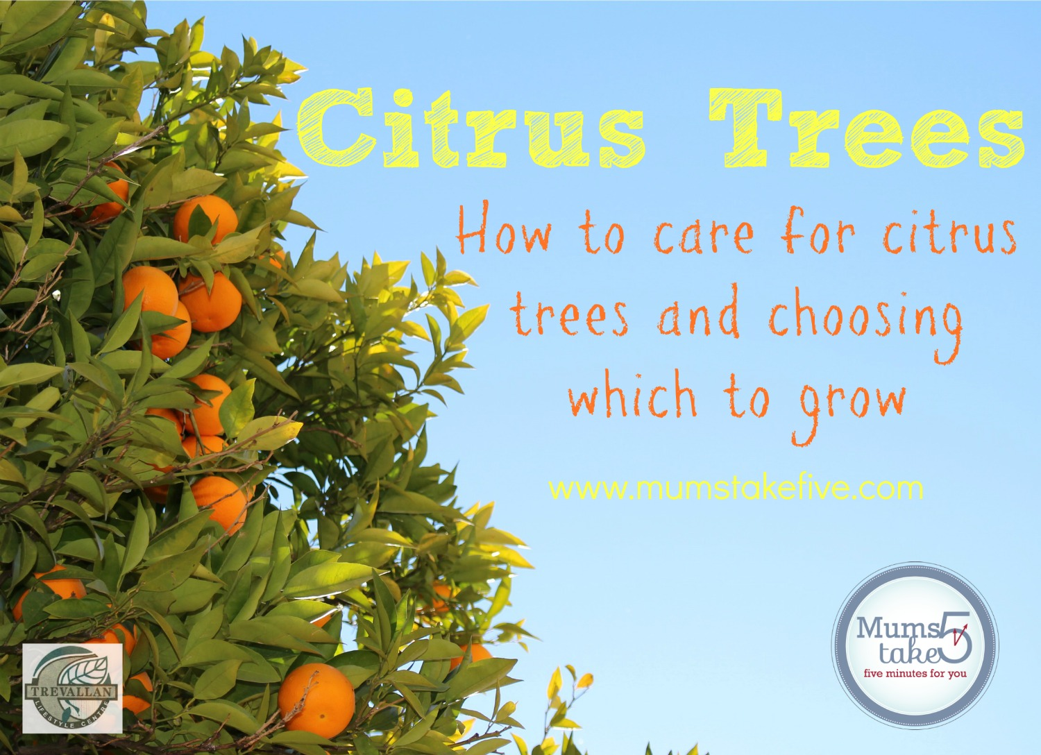 how to grow citrus trees lemons and orange trees