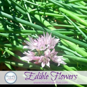edible flowers what to grow and eat
