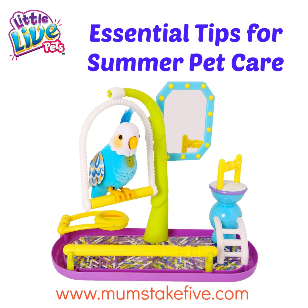 Summer Pet Care